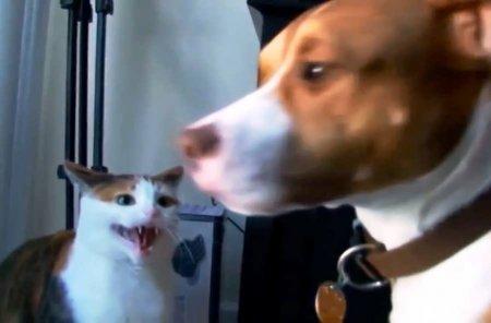 Собако-кошечный хардкор (ВИДЕО)